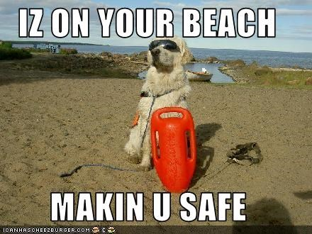 beach,labrador,lifeguard,safe,sunglasses,swimming,water