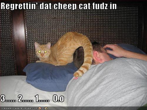 Cheezburger Image 2531247872