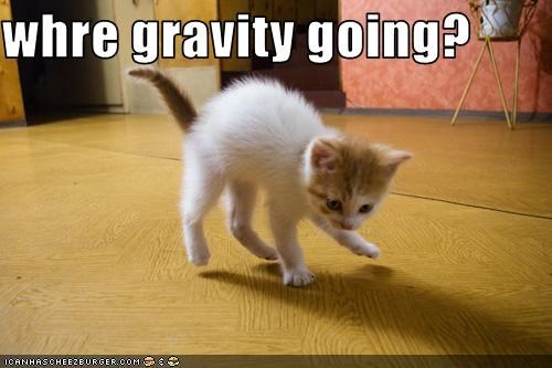 confused,cute,Gravity,kitten