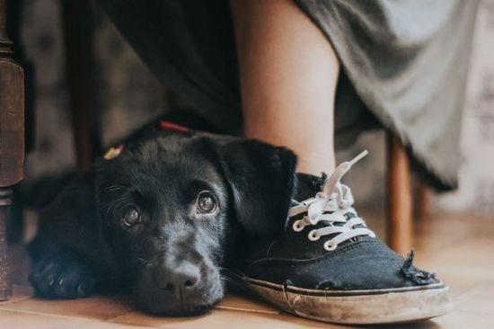 """Dog photographer of the year"" winners photos"