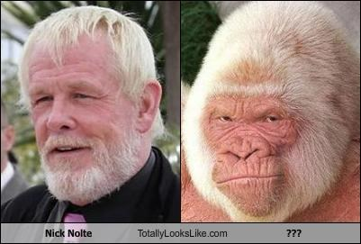 actor albino animals gorilla Nick Nolte - 2532609536