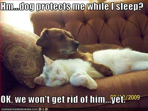 guard dog lolcats protection whatbreed - 2534678016