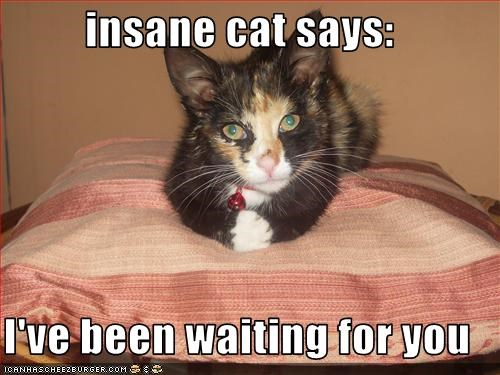 Insane Cat Says I Ve Been Waiting For You Cheezburger Funny