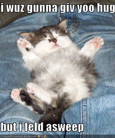 cute hug kitten nap - 2535137024