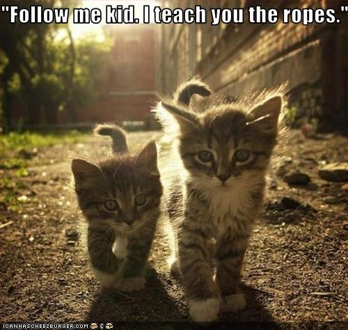 cute friend kitten teaching - 2535235072