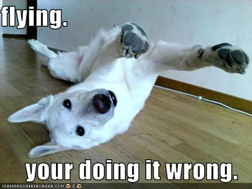 doin it wrong FAIL floor flying german shepherd