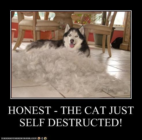 destruction explosion fur lolcats siberian husky - 2536613376