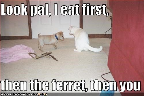 Look pal, I eat first,  then the ferret, then you