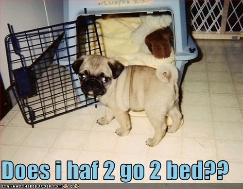 bed,bedtime,crate,pug,puppy,Sad,sleep