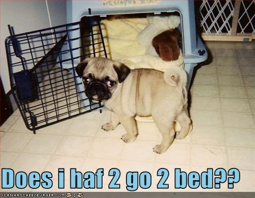 bed bedtime crate pug puppy Sad sleep - 2537158656