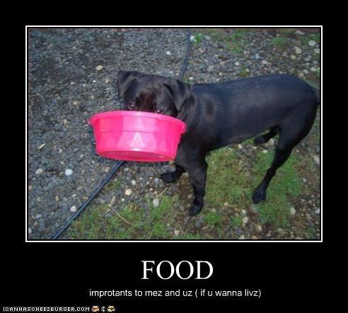 Cheezburger Image 2537189376