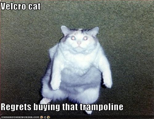 Velcro cat  Regrets buying that trampoline