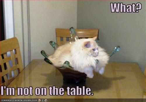 annoying bad cat bowl table - 2538292224