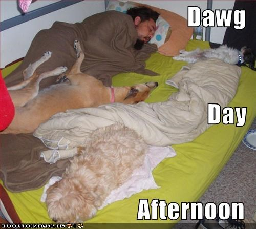 afternoon bed day havanese human shihtzu sleep - 2538292736