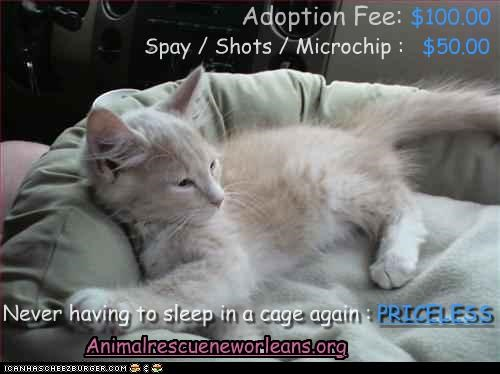 Adoption Fee: $100.00 Spay / Shots / Microchip : $50.00 Never having to sleep in a cage again : PRICELESS Animalrescueneworleans.org
