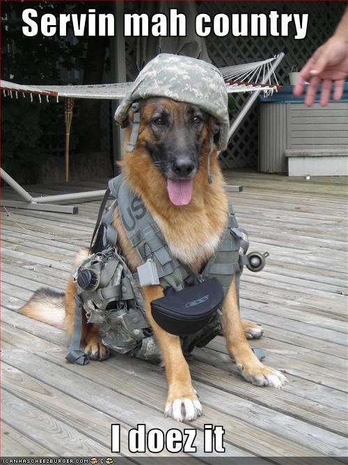 camouflage country german shepherd military service dogs soldier