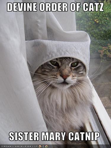 catnip curtains nun - 2540552704