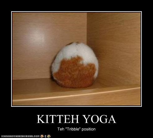 "KITTEH YOGA Teh ""Tribble"" position"