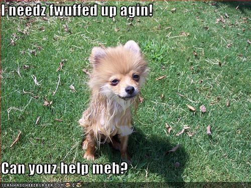Fluffy fur help pomeranian puffball puffy puppy - 2541757184