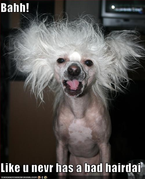 bad hair day chinese crested fur haircut ugly - 2542205952