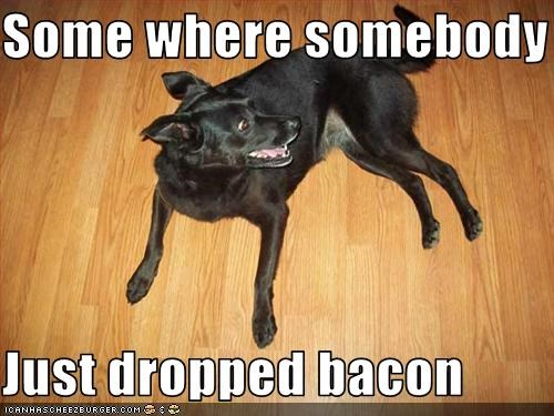 bacon excited food happy hear labrador - 2542326016