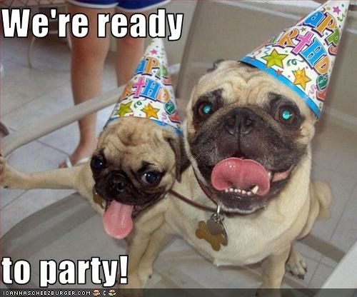 hats,Party,pug,ready