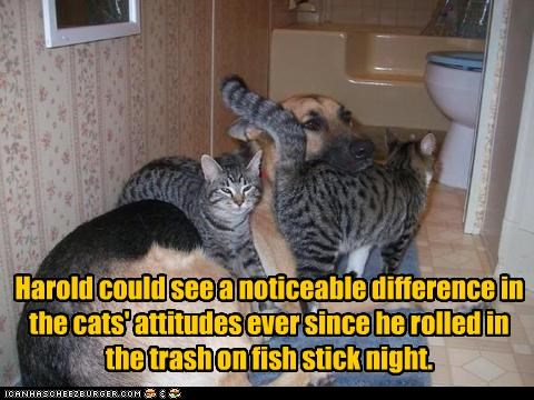 attitude,attraction,fish sticks,food,garbage,german shepherd,lolcats,rolling,trash