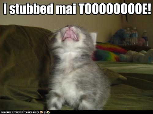 cute kitten ouch whining - 2543792384