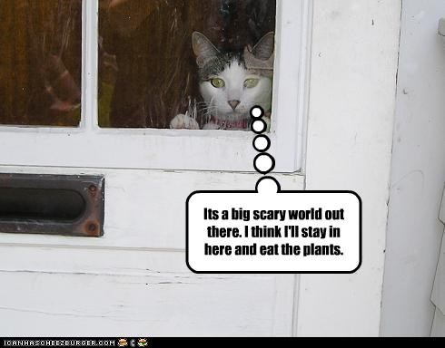 bad cat,nom nom nom,plants,scared