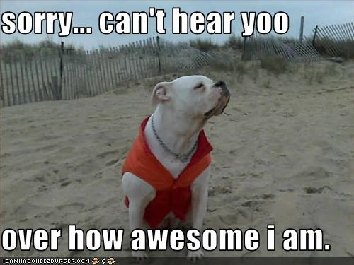 american bulldog,awesome,beach,clothing,ego,hear,sorry,vest