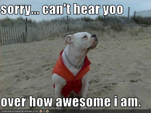 american bulldog awesome beach clothing ego hear sorry vest - 2544523264