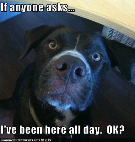 alibi,guilty,home,pitbull,trouble