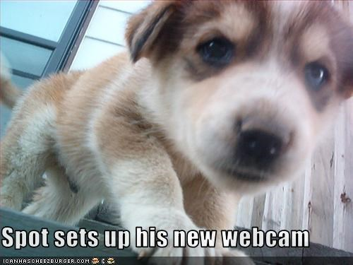 computer puppy webcam whatbreed - 2544818432