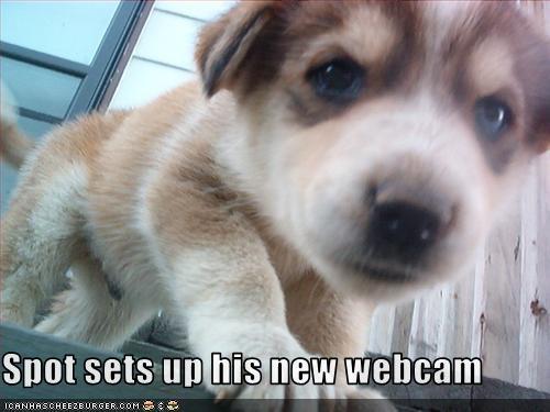 computer puppy webcam whatbreed - 2544818432