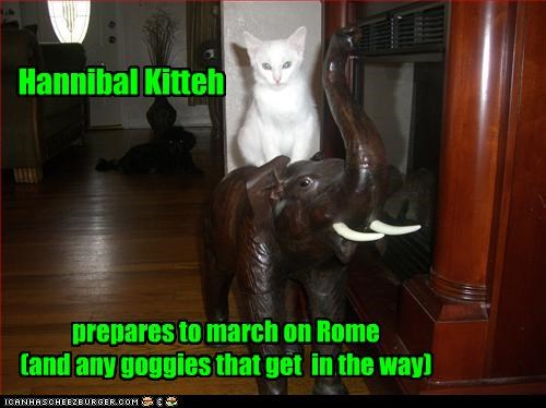 Hannibal Kitteh prepares to march on Rome (and any goggies that get in the way)