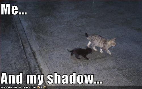 cute friend kitten shadow - 2547151104