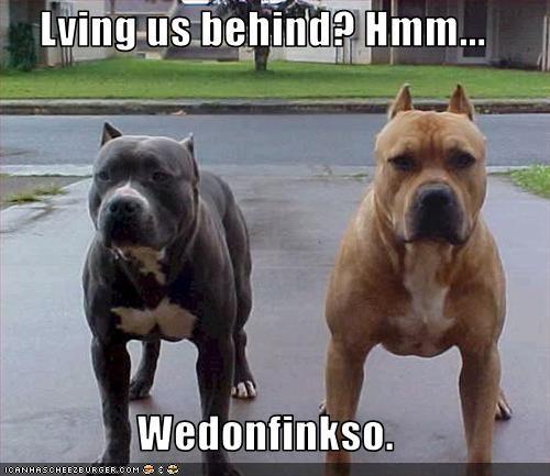 intimidating leave pitbull tough - 2547260928