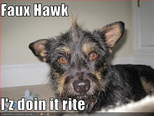doin it rite faux hawk mohawk punk whatbreed - 2548030976