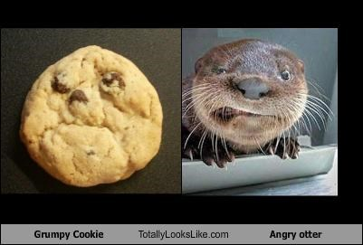 Grumpy Cookie Totally Looks Like Angry otter