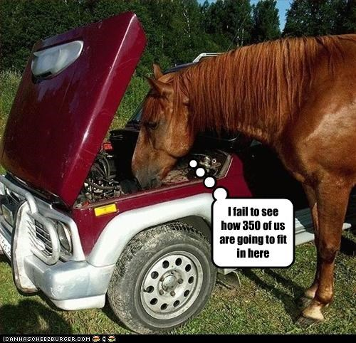 car lolhorses stupid