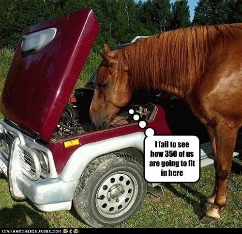 car lolhorses stupid - 2548660480