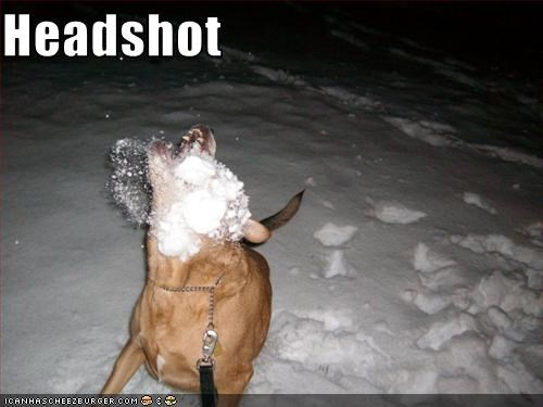ball headshot snow throw whatbreed - 2548754432
