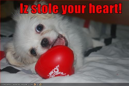 heart pomeranian puppy stole toy - 2549765632