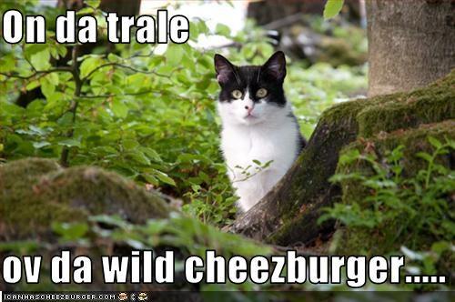 Cheezburger Image 2549954560