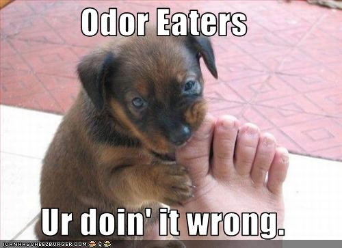 bite chew doin it wrong feet human puppy toes whatbreed - 2551749120