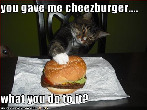 Cheezburger Image 2552068608