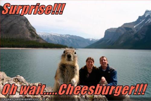 Cheezburger Image 2553128960