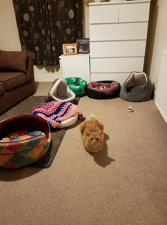 A golden orange cat lying on the floor and is surrounded by all his beds that his owners bought him and he still decides none are good enough - cover photo for a list of funny cats that have been in weird situations and that their owners have captured it, these photos have been sent by I can has cheezburger's facebook users.