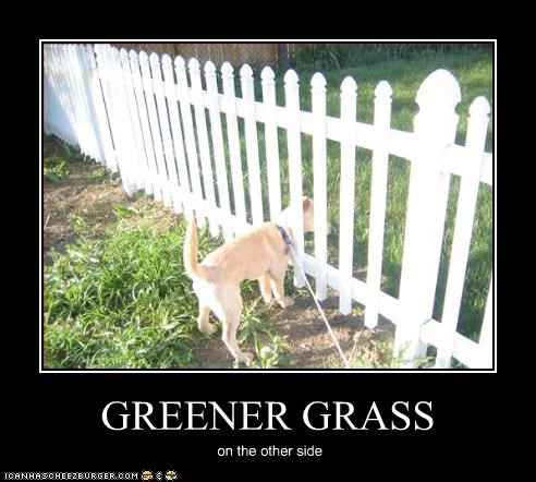 GREENER GRASS on the other side