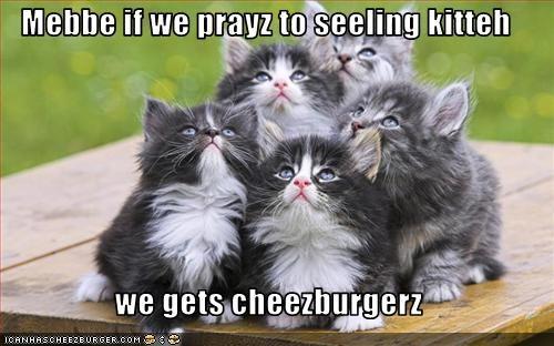 Cheezburger Image 2554774528